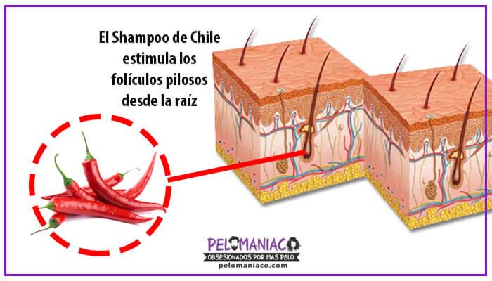 shampoo de chile para crecer el cabello