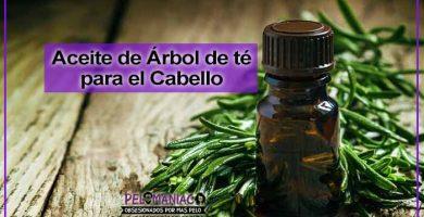 aceite de arbol de te para el cabello